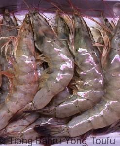 shrimp虾