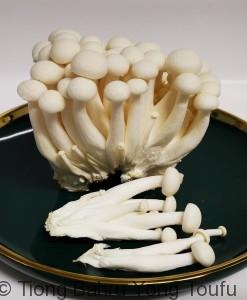 white mushroom 2